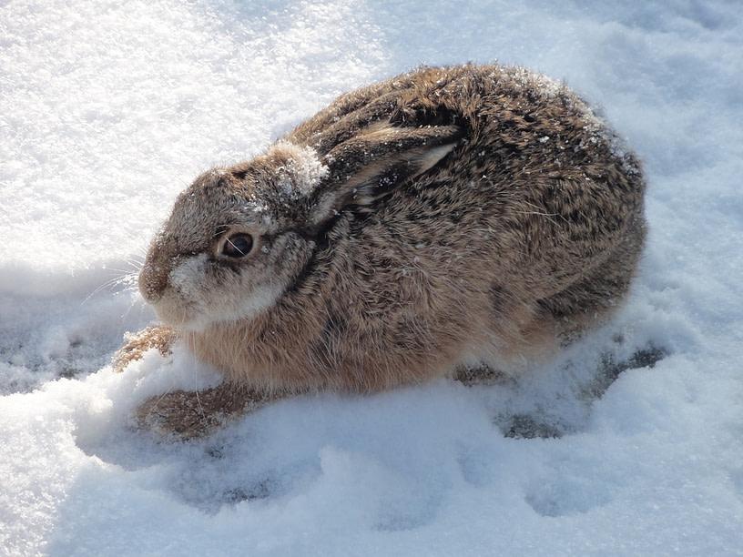 konijntje op schiermonnikoog