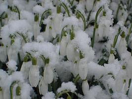 Dezintuigentuin-winter